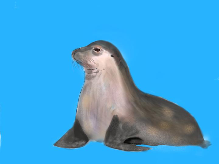 Seal #01